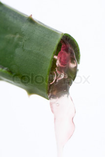 Image of 'aloe, plant, leaf'