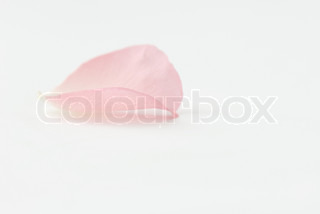 Image of 'petal, softness, blank space'