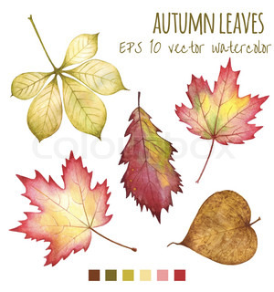 autumn leaves a water color on a white background