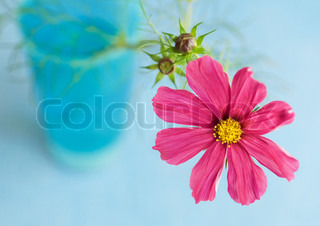 Image of 'flowers, flower, pink'