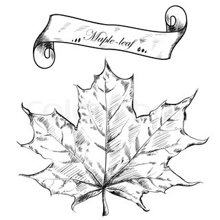 Autumn highly detailed hand drawn leaf. Vector