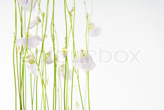 Billede af 'blomst, simple, blomstre'
