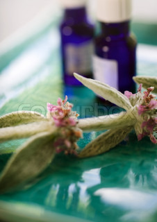 Sprig of sage and bottles of essential oils