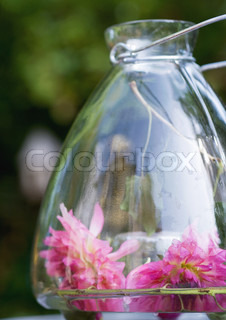 Two dahlia flowers in glass lantern