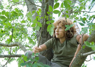 Contemplative boy looking away while sitting in tree