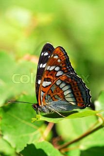 Bild von 'Schmetterlinge, Hintergrund, Natur'