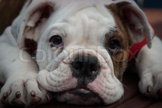 Billede af 'husdyr, hunde, hund'