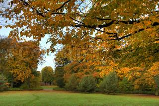 Billede af 'november, løv, ro'