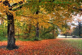 Billede af 'skov, oktober, november'