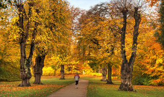 Billede af 'efterår, træ, stilhed'