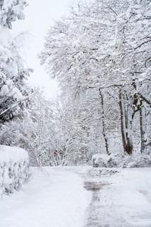 Billede af 'danmark, overvintre, vinter'