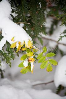 Billede af 'park, tree, vinter'