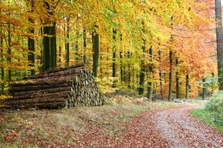 Billede af 'efterår, skandinavien, nordisk'
