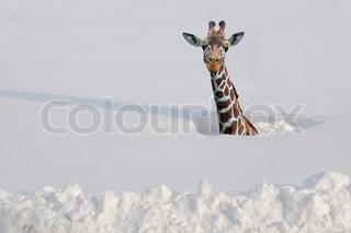 Billede af 'dyr, ulejlighed, forandringer'