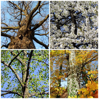 Set of four seasons trees