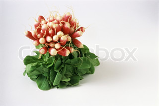 Image of 'radishes, indoor, indoors'