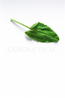 Image of 'white background, bio, studio shot'