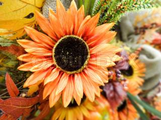 Bild von 'blume, pflanzen, farbig'