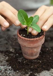Billede af 'havearbejde, jord, plantning'
