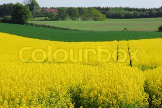 Bild von 'geerntet, pflanzen, Land'