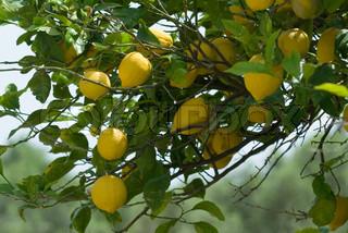 Billede af 'appelsiner, isoleret, organiske'
