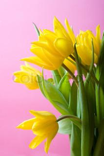Bild von 'tulpe, gegenwärtig, Strauß'