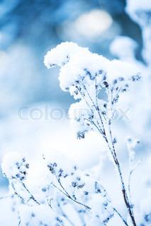 Billede af 'blå, gren, hvid'