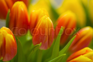 Billede af 'bryllupsdag, rød, tulipa'