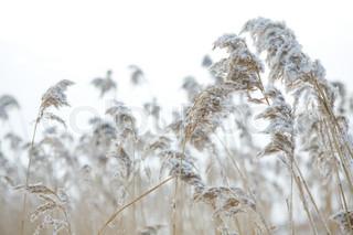 Billede af 'baggrund, naturlig, udendørs'