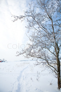 Winter scene in nature