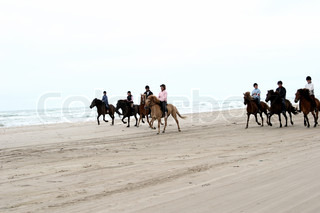 Ridding horses on a a beach  in the summer in denmark