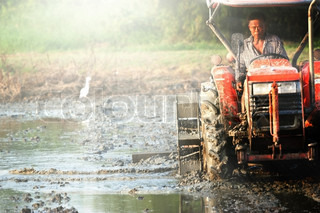 Tractor plowing  rice field in thailand
