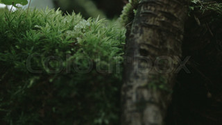 2888_An_arachnid_crawling_on_the_leaves_FS700_Odyssey_7Q.mov