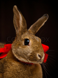 Brown christmas bunny