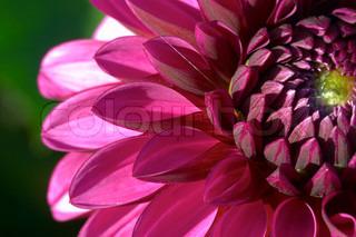 Billede af 'baggrund, mønstre, closeup'