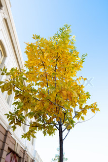 tree with yellow leaves near building