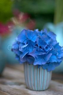 Billede af 'makro, Blomst, close-'