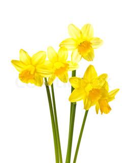 Billede af 'blomst, billede, snit'