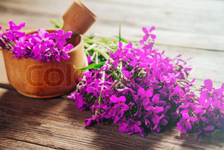 Medicinal willow-herb flowers in mortar