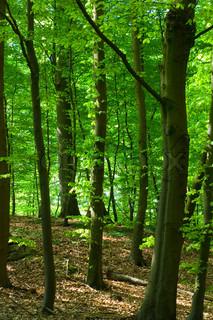 Billede af 'miljø, skovbunden, planter'