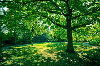 Billede af 'rolige, græsplæne, Sunray'