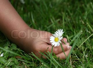 Billede af 'plante, foråret, græsplæne'