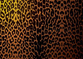 Vektor af 'leopard, animals, hvid'