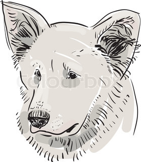 Head, muzzle the dog. Shepherd. Sketch drawing. Black contour on a white background. vector