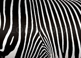 Black and white zebra skin or hide that makes ideal background