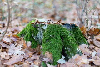 moss-covered tree stump in the forest