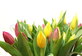Bouquet of tulips in yellow, pink and green colors