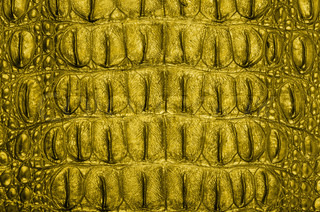 Crocodile bone skin texture background.