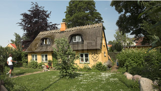 traditional house  with  thatched traditional  roof   in denmark a sunny summer day, a dog on the house path