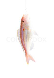 Billede af 'fiske, let, indenfor'